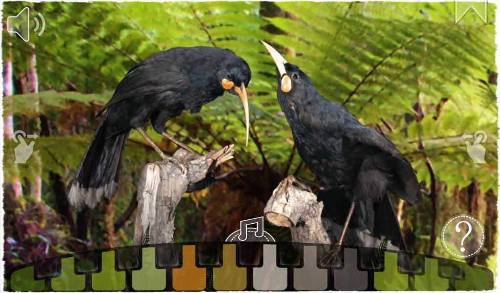 12 Huia Birds- screenshot