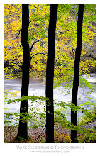 Photo: Beech Trunks  Taken on the same day as Swirling Leaves these beautiful beech trees by the path in Strid Wood provided a natural composition against the fast flowing water of the River Wharfe.  Canon EOS 5D, 24-105mm at 50mm, ISO 100, 2s at f22