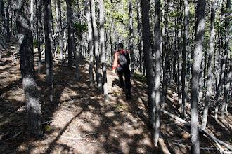 Photo: Heading down through the trees.
