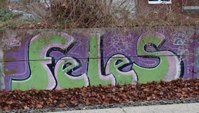 Photo: FELES