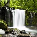 自然音 - 森を緩和