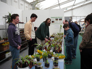 Photo: Special CP-exhibition at the Regio-Messe 2010. At the sales stand with plants from Thomas Carow: Elvis Pöhlmann, Dr. Rafael Camara, Thomas Leible und Renate Keller.