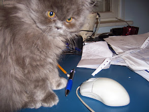 Photo: Cat and mouse