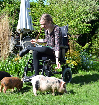 pigs as therapy
