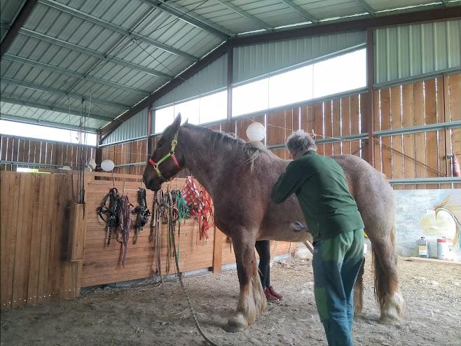 馬をブラッシング