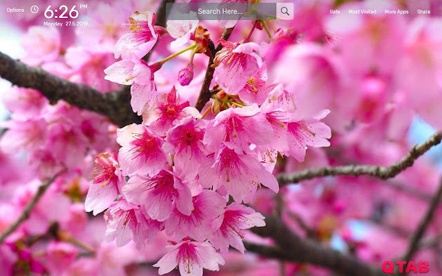 Cherry Blossom Wallpapers HD Theme