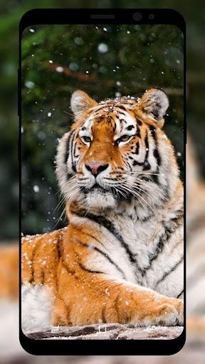 Tiger Wallpaper HD  screenshots 2