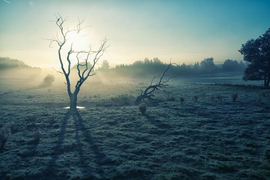 death tree by Steve Struttmann - Landscapes Prairies, Meadows & Fields