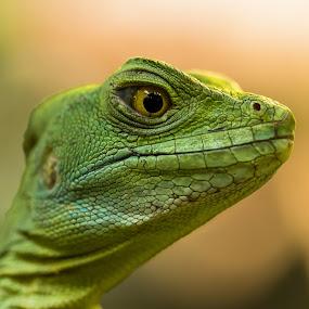 Rex by Jürgen Sprengart - Animals Reptiles ( green, wasseragame )