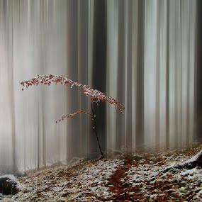 Misty forest by Stane Vidmar - Landscapes Forests