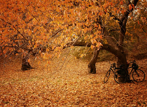 """Photo: """"For two...""""  New York Photography: Autumn in Central Park.  After nearly 6 weeks of dealing with a fairly intense leg injury (you can read about it here if curious: https://plus.google.com/u/0/108527329601014444443/posts/Szw5VXChZwN ), I was finally able to go out for the first time yesterday and walk around the way I normally do. I think I walked something like three miles in total! It felt incredible to not be limited in the way I was limited previously while dealing with the slow healing process. I ended up going to Central Park to soak in the remaining bits of autumn since autumn is so fleeting here in New York City.  I met up with a few other #NYCPhotoWalkers later in the afternoon. Prior to meeting up with them I got to the park several hours earlier to go to my favorite sections of the park. I was still a little timid and apprehensive about doing a lot of walking even though I got the go-ahead from my doctor this past week to engage in my normal level of activity. Thankfully, I realized an hour into climbing around in piles of leaves (sometimes it's fun to abandon the paved paths in Central Park especially when leaves are involved) that I was going to be just fine! The foliage was a bit past peak foliage but there were some genuinely magical landscapes.  It's no secret that autumn is my favorite time of year. A while back I mentioned here that I am saddened that autumn's finest foliage only seems to grace us with its presence for a few weeks out of the year. Someone commented back to me that the short-lived nature of autumn is what makes it so special. Perhaps there is some truth to that notion. The fleeting transient nature of autumn does make it memorable.  There is a bittersweet quality to the action of capturing it in full splendor; giddy delight at experiencing something so magical mixed with sorrowful anxiety knowing that in a short time all of it will be only a preserved memory.  --  You can view this post along with information about prints of"""