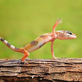 push up by Shikhei Goh II - Animals Reptiles ( shikhei, teman )