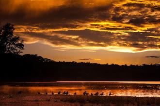Photo: Goodnight, ducks My favorite flock at my favorite lake at my favorite time of day.  #365project curated by +Susan Porter+Simon Kitcher+Patricia dos Santos Paton+Vesna Krnjic  #landscapephotography curated by +Margaret Tompkins+Carra Riley+paul t beard+Ke Zeng+David Heath Williams