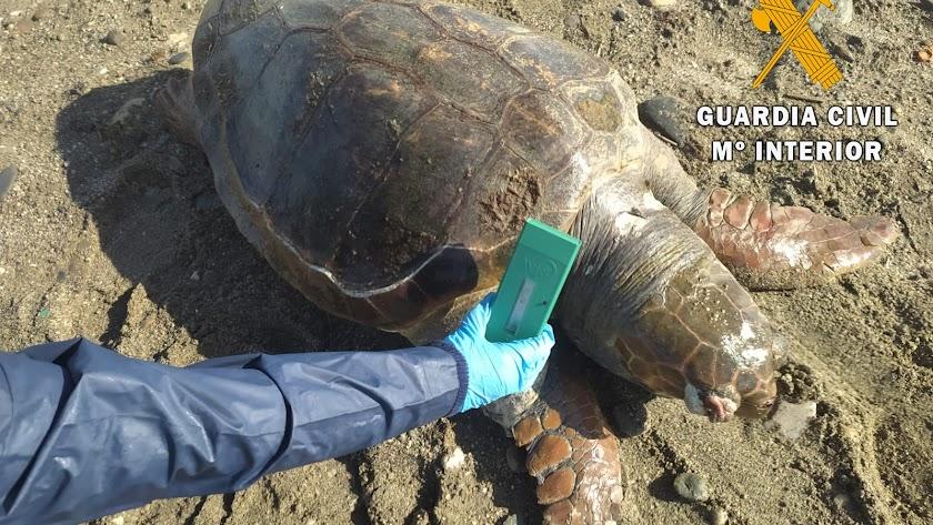 La tortuga apareció en la playa de Guardias Viejas.