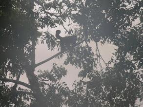 Photo: Monkeys!
