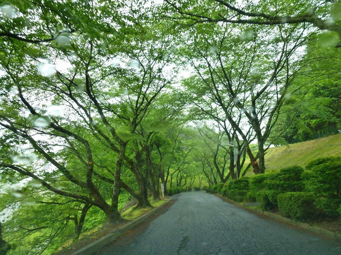 志津川高校旭桜坂 写真5