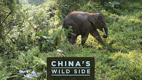 China's Wild Side thumbnail