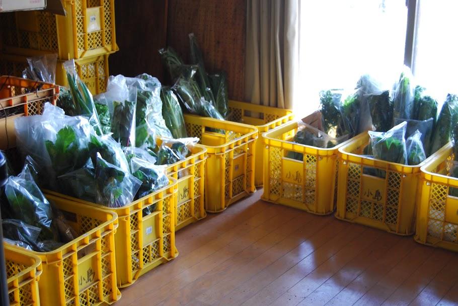 今年は、1室がお芋さま部屋兼お野菜を分配する部屋になっています。