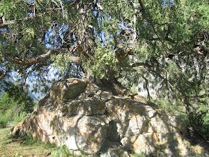 Photo: Abshir, stone & tree (mountain juniper)