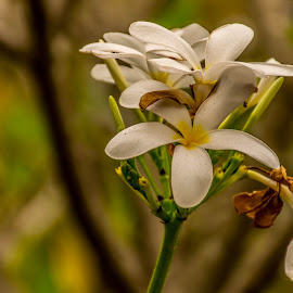 the colours around the white by Hariharan Venkatakrishnan - Flowers Flowers in the Wild