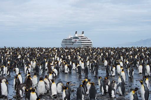 Ponant-Gold-Harbour-penguins.jpg - Gold Harbour on South Georgia Island in the South Pacific is the home of a large king penguin colony.