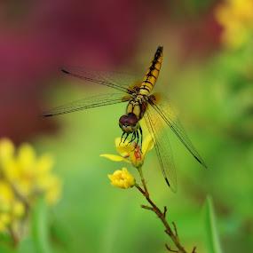 by Saif Ambalappuzha - Flowers Flower Gardens