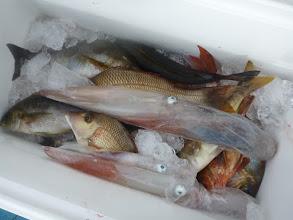 """Photo: こちらも""""戸田さん""""の釣果! イカもやってみましたが数ハイしか きませんでした。 ・・・ここの海域、イカの釣れ出すのは もう少しあとですね。"""