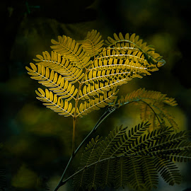 Leaves by Gunbir Singh - Nature Up Close Leaves & Grasses ( leaves, light, great light, yellow, gunbir )