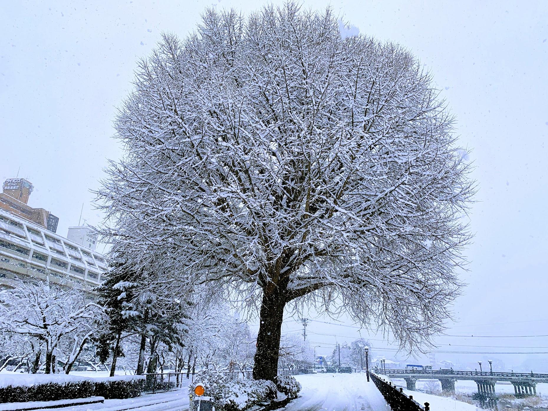 今日の盛岡の雪景色