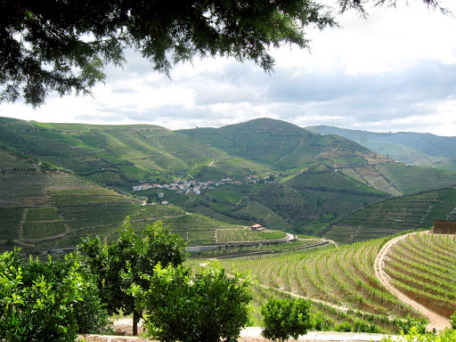 Irrigated fields along the bucolic banks of the Douro River in Portugal.