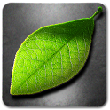 Fresh Leaves icon
