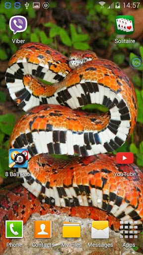 Snakes SHAKE And Change LWP