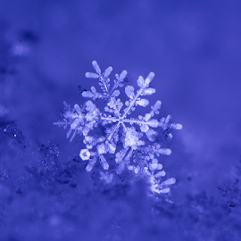 fresh snowflake by Kevin Adams - Nature Up Close Water