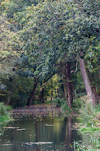 Photo: Here's my contribution to #TreeTuesday. This was taken a week or so ago during a walk along from Chippenham to Lacock along the Wilts and Berks Canal. The canal was abandoned in 1901 and nature slowly took over, aided by some of the structures being used as demolition practice during the Second World War!  The canal is now in the process of being restored to its former glory by a team of volunteers. This work was very much in progress on the Sunday we were there and it was impressive to see how much effort was being put into it.