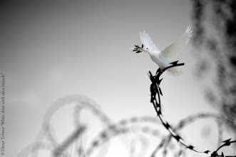 Photo: ©Dieter Tröster/White dove with olive branch