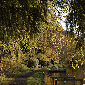 by Eloise Rawling - City,  Street & Park  City Parks ( footpath, leading lines, autumnal, park, autumn gold, lake )