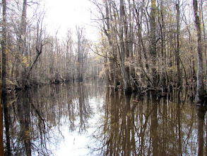 Photo: Lake at Four Holes Swamp in the Beidler Forest