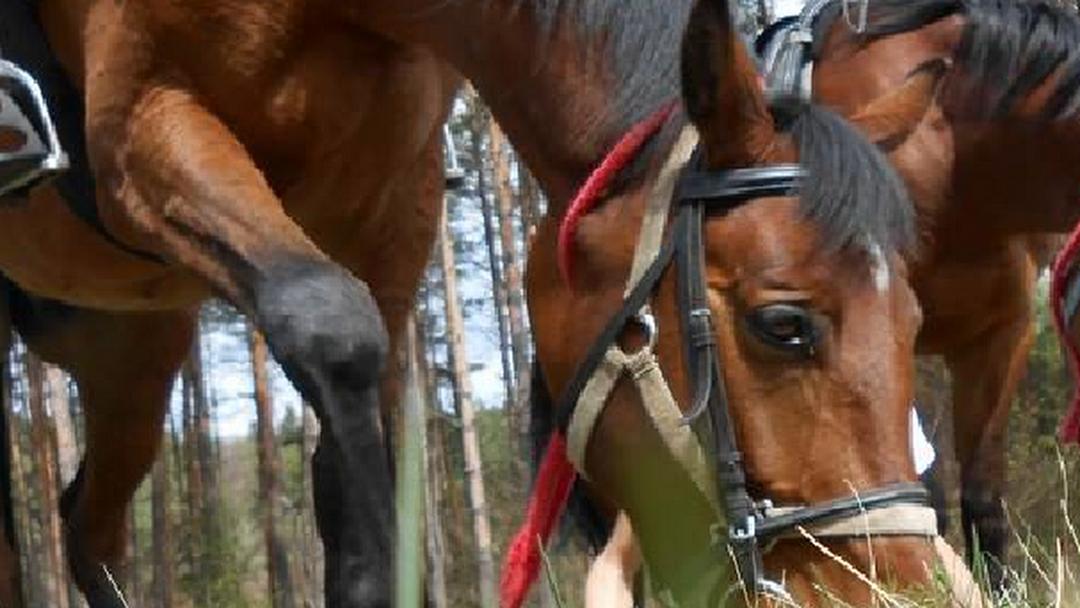 1508a13ca7de3 Pro-horse Internetowy Sklep Jeździecki - Internetowy Sklep ...