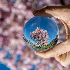 PINK TREE by Paula NoGuerra - Artistic Objects Glass ( spring, spring flowers, springtime, blossom, lensball, tree, blossoming,  )