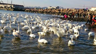 Photo: 煙墩角-天鵝湖景區