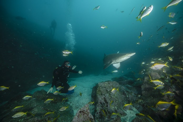 Chris Hemsworth: la playa de los tiburones