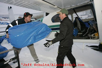 Photo: Saturday February 17th 2007 At Merrill field in Anchorage, Volunteer bush pilots and helpers load straw into Cessna planes for travel out to some of the first checkpoint along the Iditarod Trail in preparation for the 2007 Iditarod sled dog race.