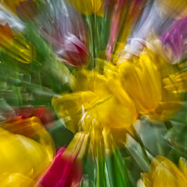 by Jim Jones - Abstract Patterns ( flowers, art, nature, abstract, tulip )