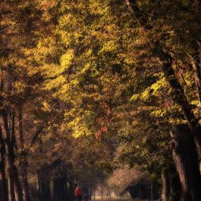 by Radu Moldovan - Landscapes Forests