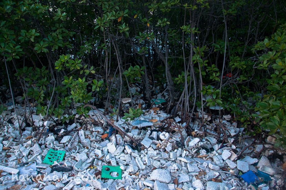 Sampah sterofoam yang tersangkut di Hutan Bakau.