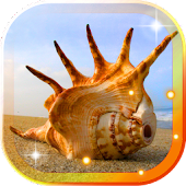 Sea Shells Beach Live Wallpaper Android APK Download Free By SweetMood