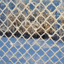 Frosty Fence by Patricia Phillips - Abstract Patterns ( patterns frost alaska winter )