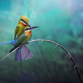 Blue-tailed Bee-eater IIlI by Sasi- Smit - Animals Birds