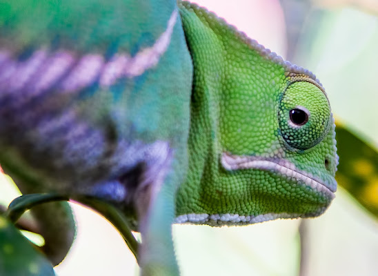 Verde  di Lultimo