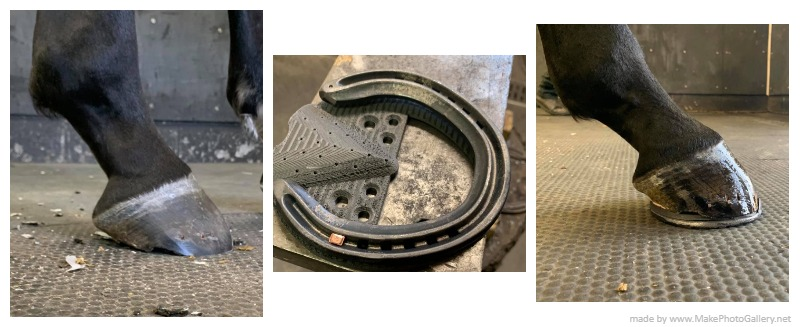 Repairing an Injured Hoof with a Newly Installed 3D Printed Horseshoe Interface
